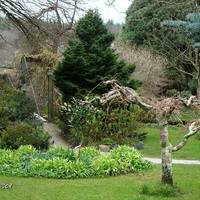 Mount Usher Gardens: kert Robinson-módra