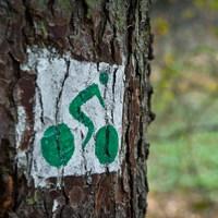 Az erdőtörvény bicós szemmel