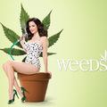 Közeleg a Weeds 4. évada