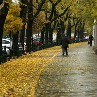 A bicikliúton raktározzák a leveleket