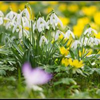 Késve bár, de törve nem – itt a tavasz!