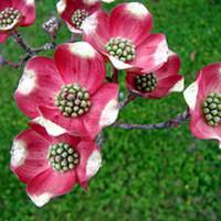 További tippek a kerti növények célszerű helyválasztásához