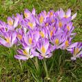 Indul a kertépítés szezonja: Ültessünk virágokat!