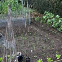 Munka a veteményessel, avagy a zöldséges kert építése