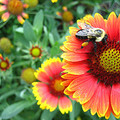 A kerti növények kiválasztása – III. rész