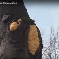 Mi történt a fákkal a Stefánián? - Frissítve!