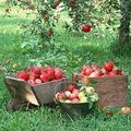 Gyümölcsfa kalauz