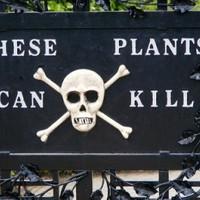 Halálos növények kézközelben