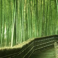 10 érdekesség a bambuszokról!