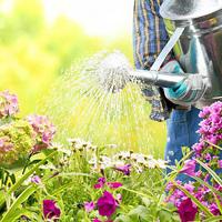 Kánikulai növényápolás