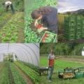 Közmunka, szociális kert, és háztáji önellátás