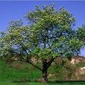 Egy fa az örökkévalóságnak