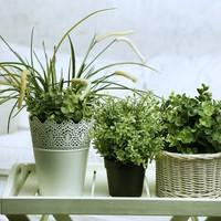 Három veszélyes szobanövény betegség