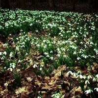 Tavaszvárás Alcsútdobozon