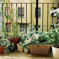10 tipp a sikeres balkonkertészkedéshez!