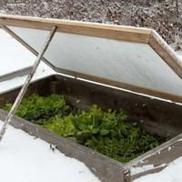 Egy frappáns módszer: a tél alá vetés!