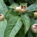 3 különleges kerti gyümölcs