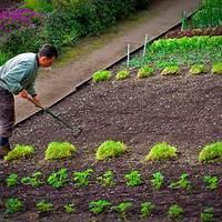 Tanácsok zöldségeskert-tervezéshez Vol.2