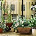 Balkonkertészkedés kérdezz-felelek