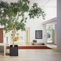 Hogyan neveljünk fát a lakásban?