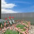 Zöldség és virágpompa a társasház kertjében