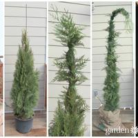 3 szuper alternatív karácsonyfa!