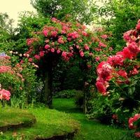 Tavaszi rózsaültetés pár egyszerű lépésben!