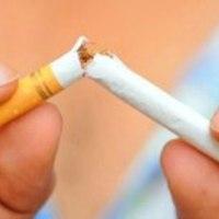 Dohány helyett más növény