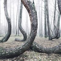 Mitől görbülnek a fák?
