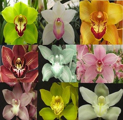 Orchidea l z megyeri szabolcs kert sz blogja - Orchidee da esterno ...