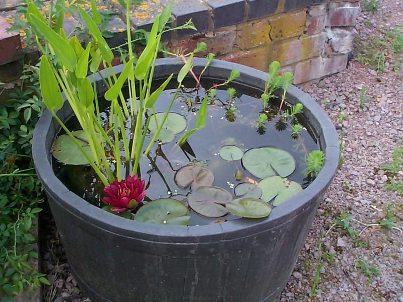 Csod s d zsatavak megyeri szabolcs kert sz blogja for Pond in a pot ideas