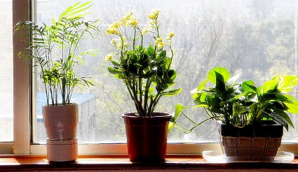 How-to-care-for-the-plants-in-holiday.jpg