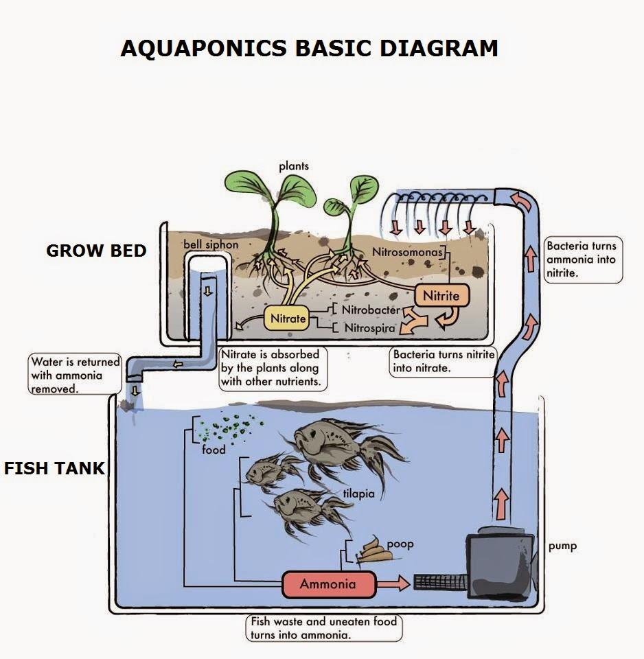 aquaponics-illustration.jpg