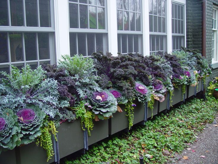 f859933ec80682e66c275c019b5917dc--fall-container-gardening-fall-containers.jpg