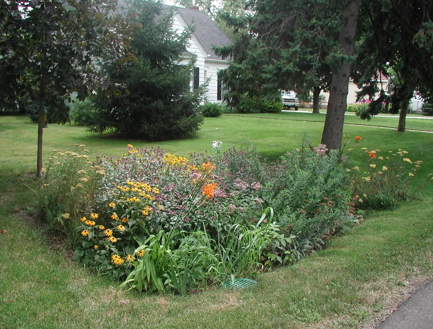 rain-garden-maplewood-minnesota.jpg