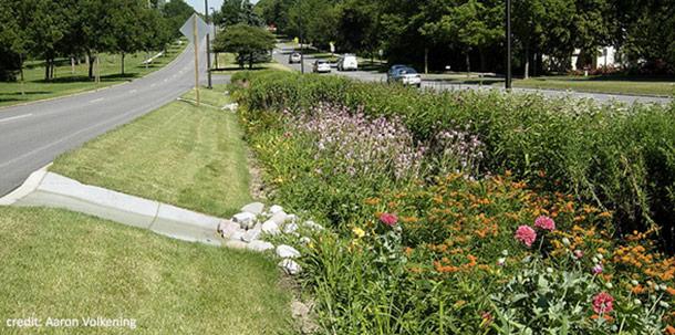 rain-gardens01.jpg