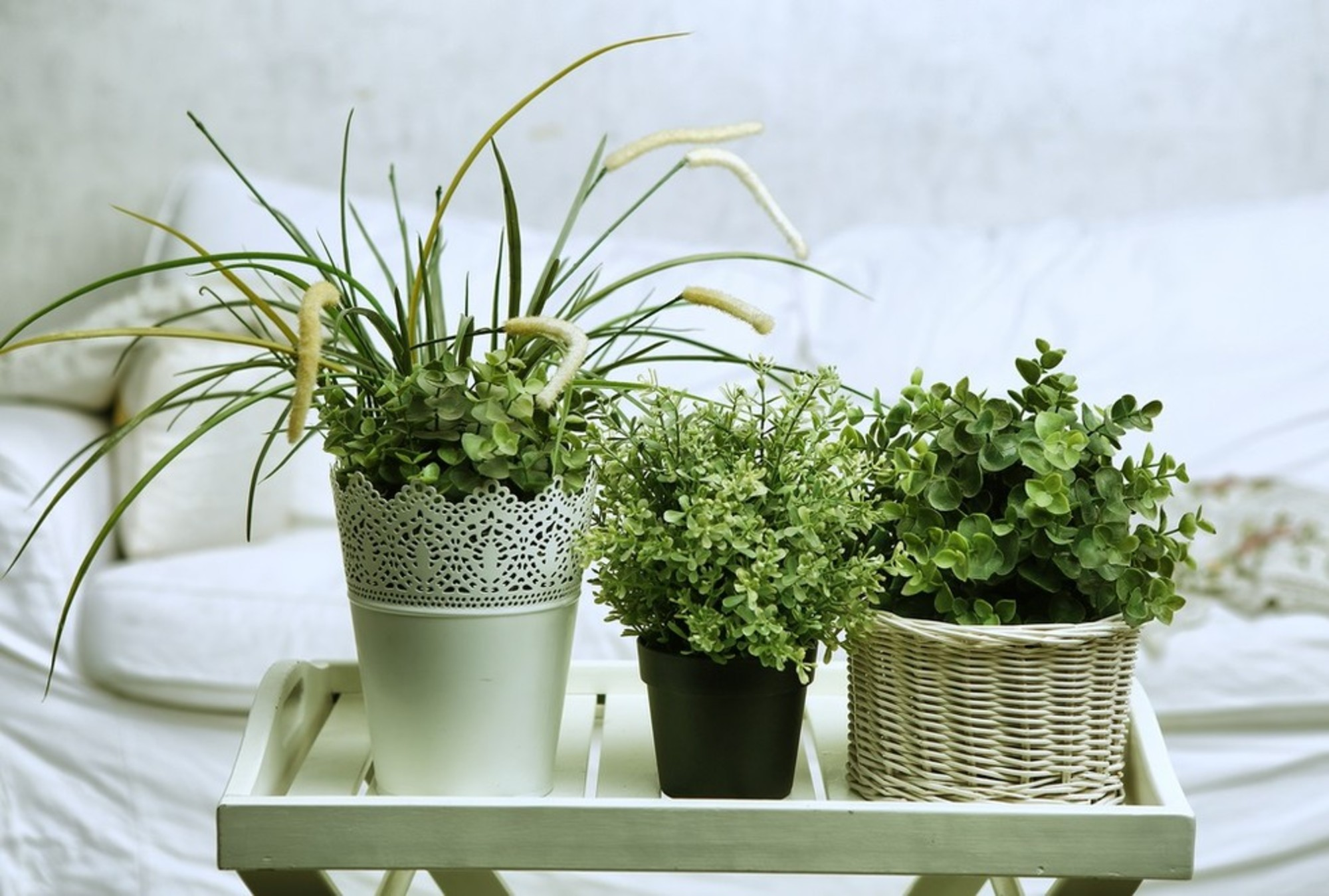 can-we-keep-plants-in-bedroom-house-plants-for-healthy-air-5-plants-for-bedroom-snake-plant-indoor-bedroom-plants-oxygen-at-night.jpg