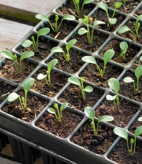 54eb651eb8705_seed-starter-tray-0213-xln.jpg