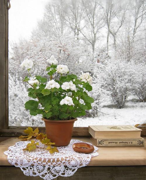 winter-care-of-indoor-plants-e1449464118124.jpg