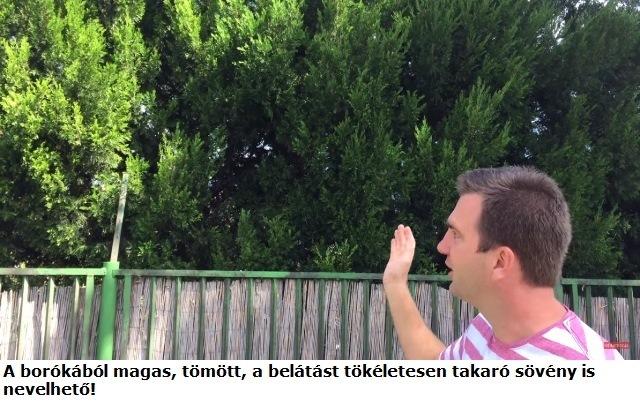 boroka.jpg