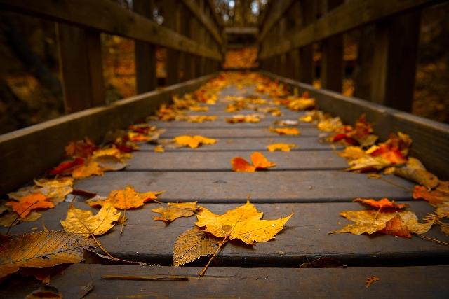 autumn-bridge.jpg