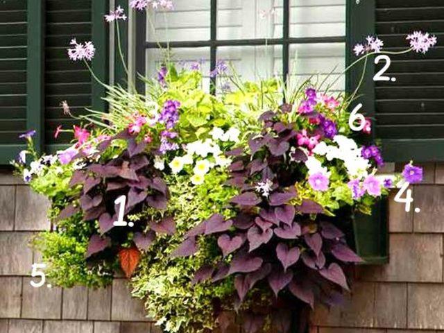10 különleges nyári virágláda