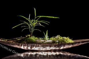 Hortorium - mini táj a cukortartóban