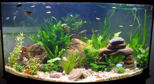 Az akv rium kigondoltam for Aquarium einrichtungsideen