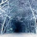 A fehér erdő