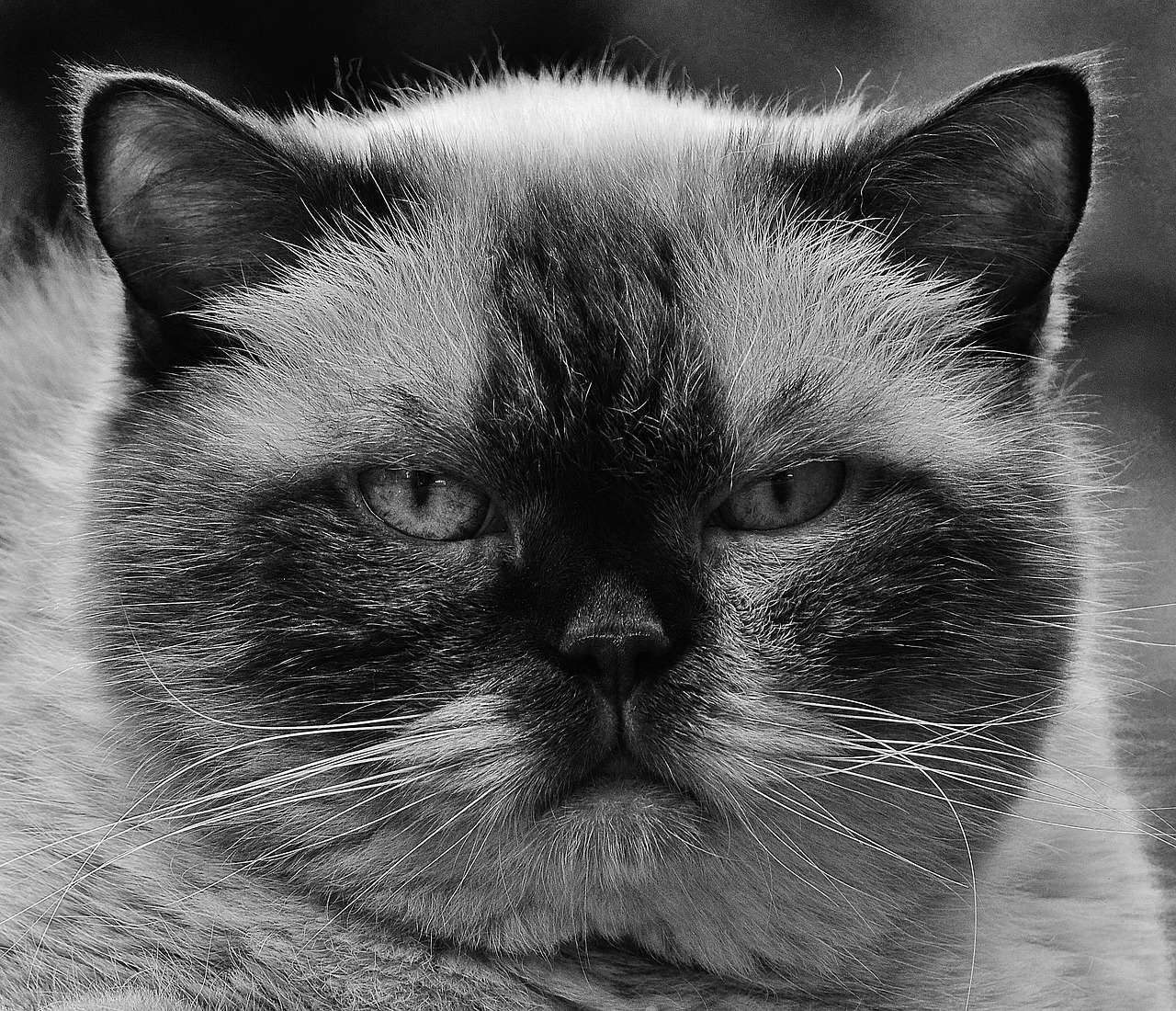 cat-1615641_1280.jpg