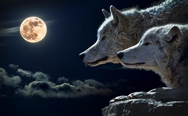 wolf-547203_640.jpg