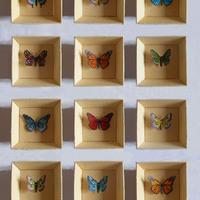 Pillangók 2015