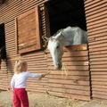 Állatok, uszoda és lovak