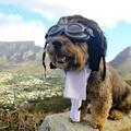 Egy világjáró kutya kalandjai képekben